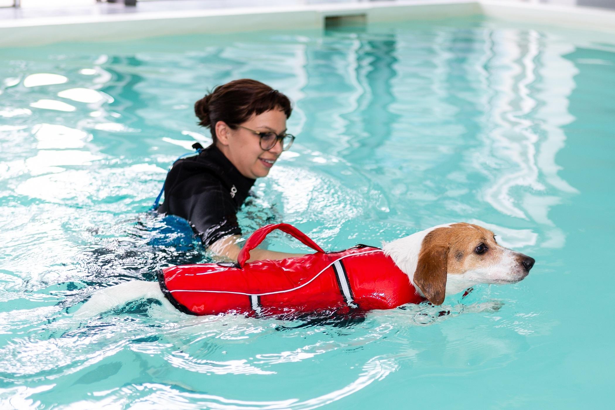 Obesidade em cães e treino físico